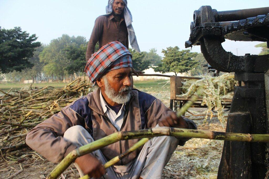 Jaggery - Verarbeitung aus Zuckerrohr